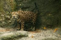 Alberta, Virginia Citywide zoo leopard